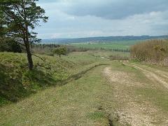 Martin Down, Hampshire